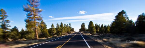 Landschaftsbild am Highway in Arizona, USA. Aufgenommen vom Auto aus in hoher Geschwindigkeit auf der Straße mit vorbeiziehenden Bäumen entlang der Straße