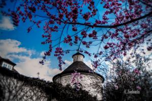 Blüten vor dem Turm der Villa Schwalbenhof in Gärtringen