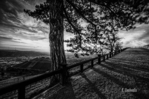 Schwarzweiß Aufnahme am Rotenberg in Stuttgart. Der im Vordergrund stehende Baum verdeckt die Sonne, jedoch sind die langen Schatten der tiefstehenden Sonne zu sehen. Nominiert für die 11th Black & White Spider Awards in der Kategorie Nature Professional